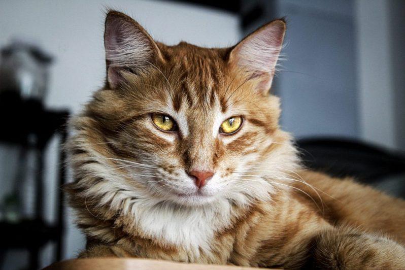 年収アップに興味津々な猫