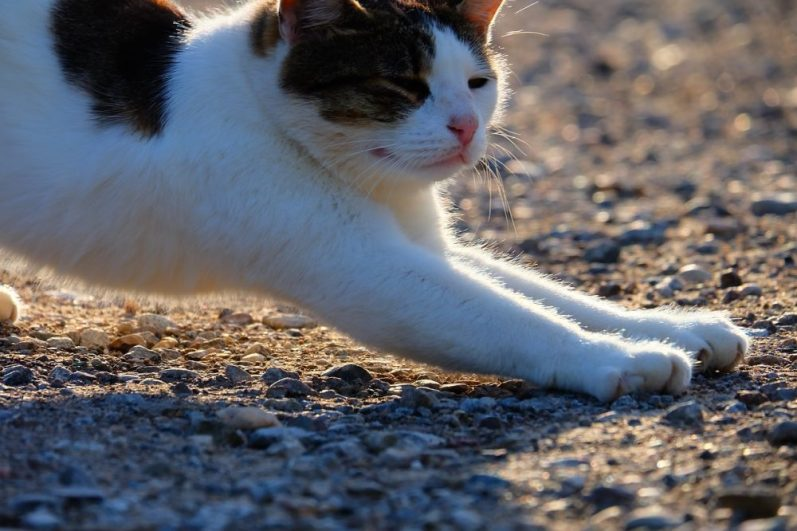 就活マニュアルを語る猫