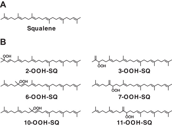 Evaluation of squalene oxidation mechanisms in human skin