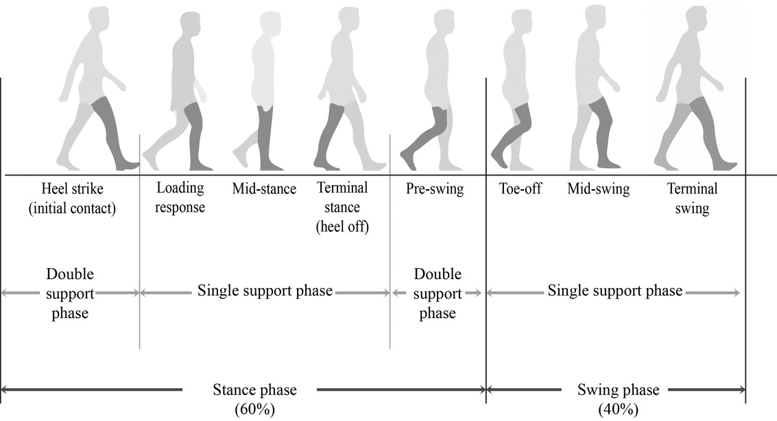"""Walking"" through the sensory, cognitive, and temporal"
