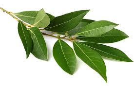 l'huile essentielle de laurier stimule le cuir chevelu et permet de ltter contre la chute de cheveux