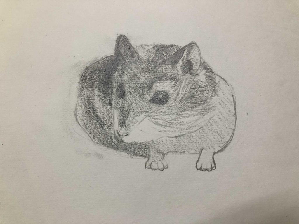 Comment dessiner un hamster crayon - Dzhungarian 4 scène - photo