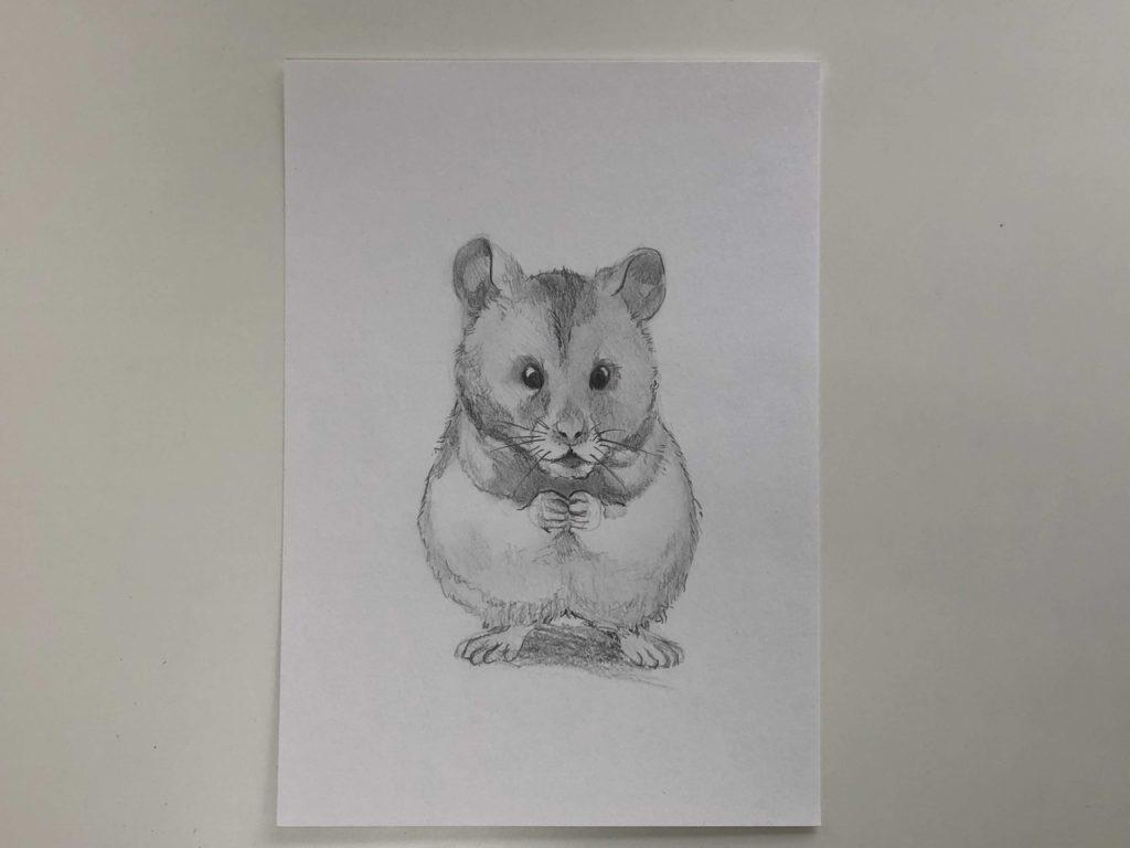 Comment dessiner un hamster au crayon - Simple Hamster 3 Stage - Photo