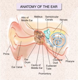 Hearing Center « The ENT Center at the NY Otolaryngology Group