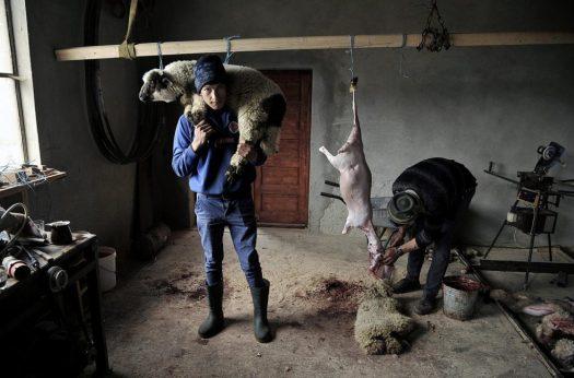 IAAP Gold Medal - Istvan Kerekes (Hungary) - Lamb slaughter