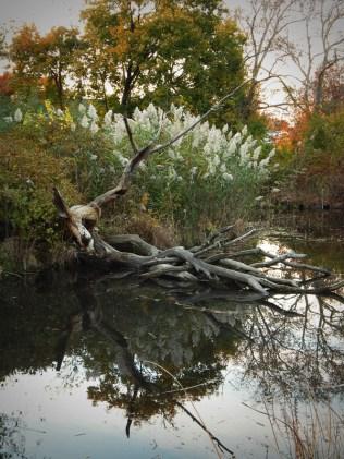 Pond in Healing Garden