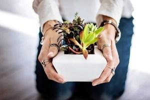 Hand hoalding a plant