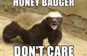 Honey-Badger-Dont-Care