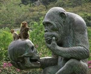 maymunlarin-evrim-teorisi-hakkindaki-dusunceleri_157433_m