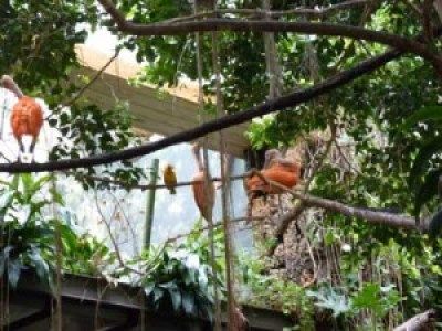 birds central park zoo