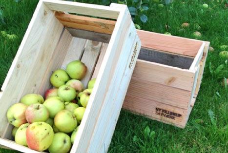 Robuste æblekasser med æbler