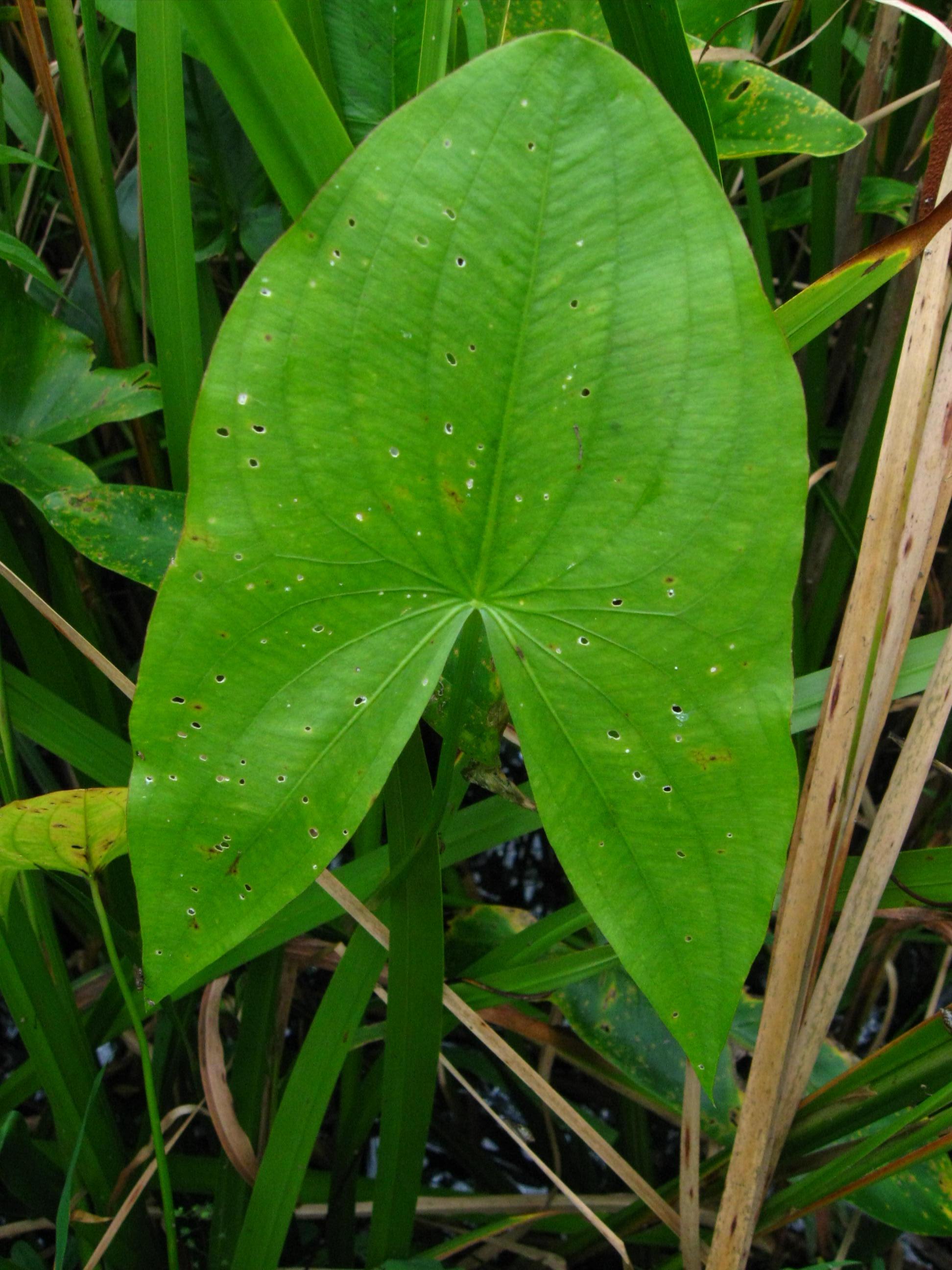 Catskill Marsh 2009-7