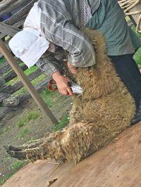 Sheep-to-Shawl Festival at Philipsburg Manor - NY Foodie ...