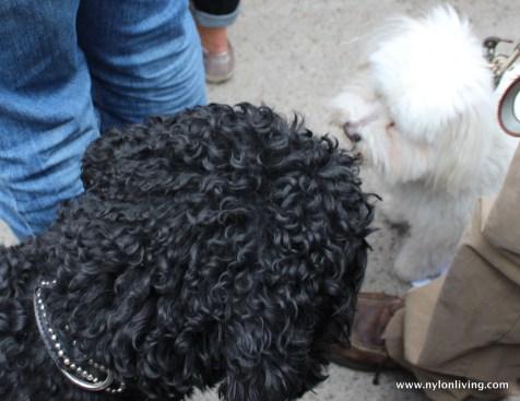 greeting dog