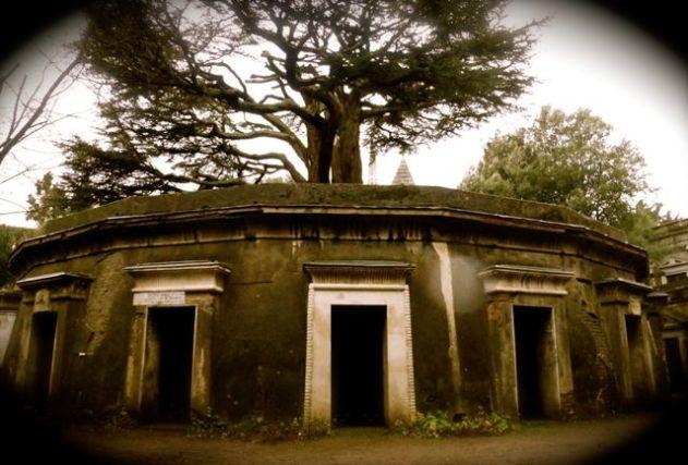 highgate cemetery cedar