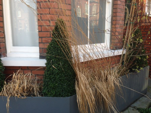 topiary and grass