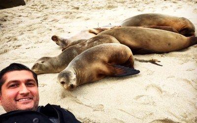 No Selfies With Seals!