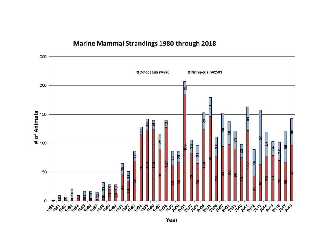 Marine-Mammal-Strandings-through-2018