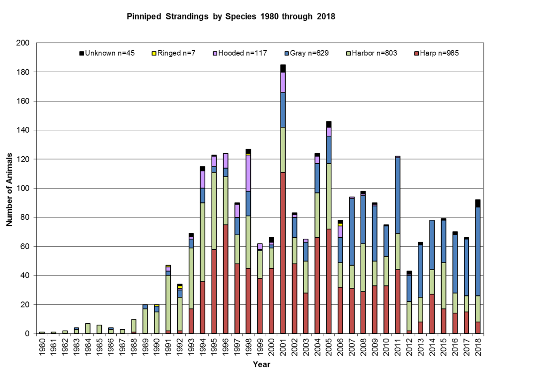Pinniped-Strandings-by-Species-through-2018