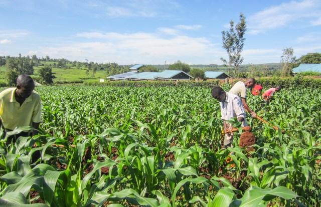 Nyota_organic_farming-6803
