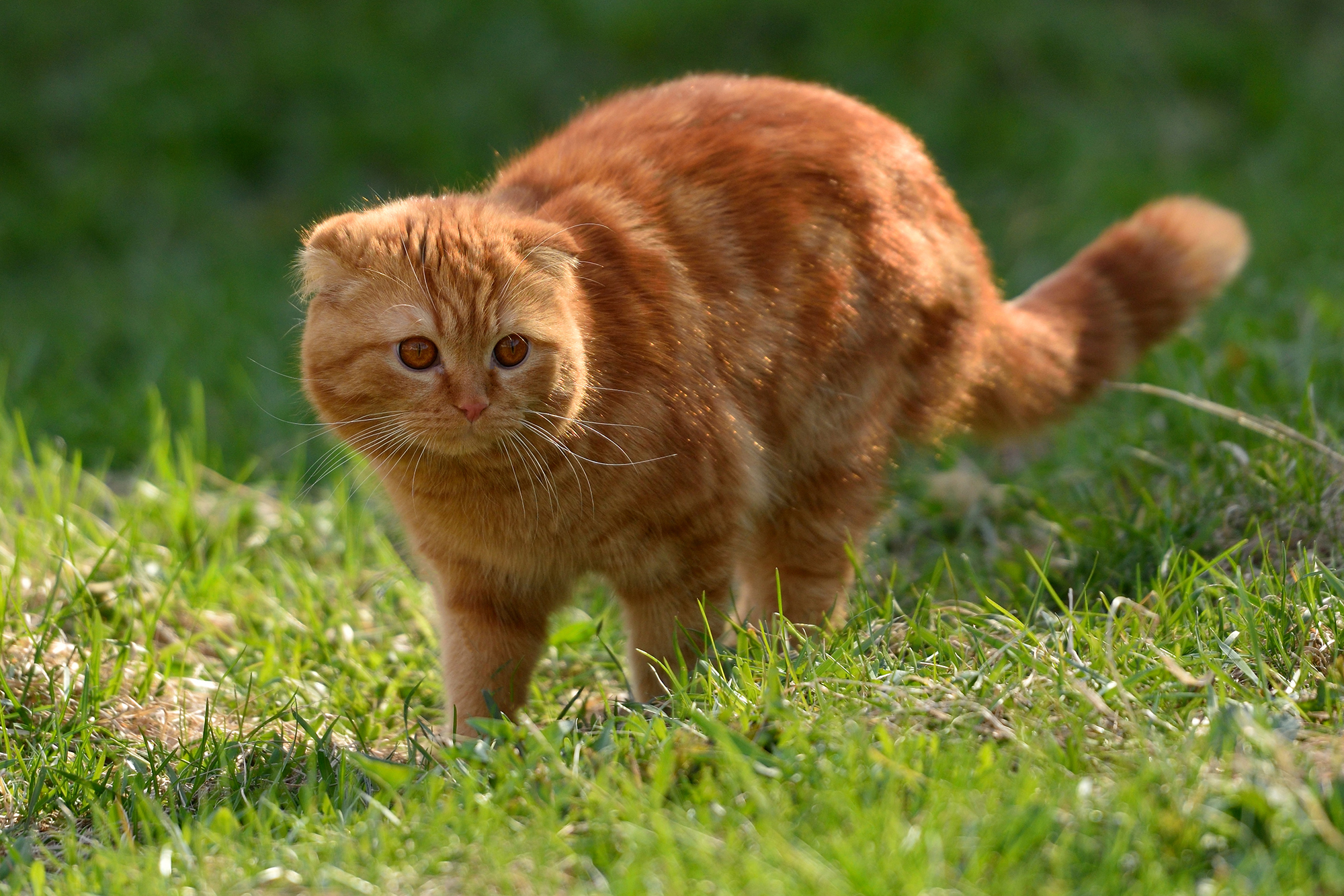 Mom Makes Hilarious Plea To Borrow A Garfield Like Cat