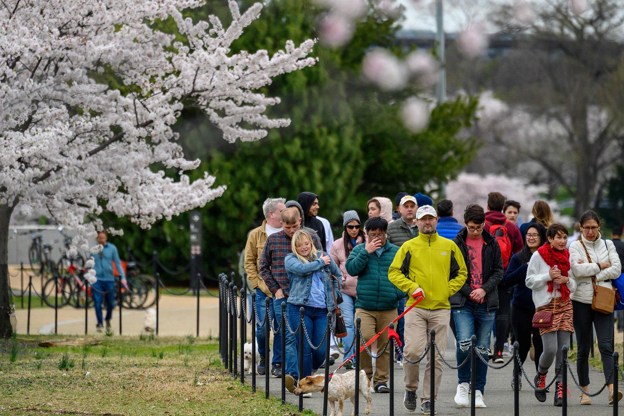Amid Coronavirus Lockdowns Cherry Blossoms Draw Crowds In D C Tokyo