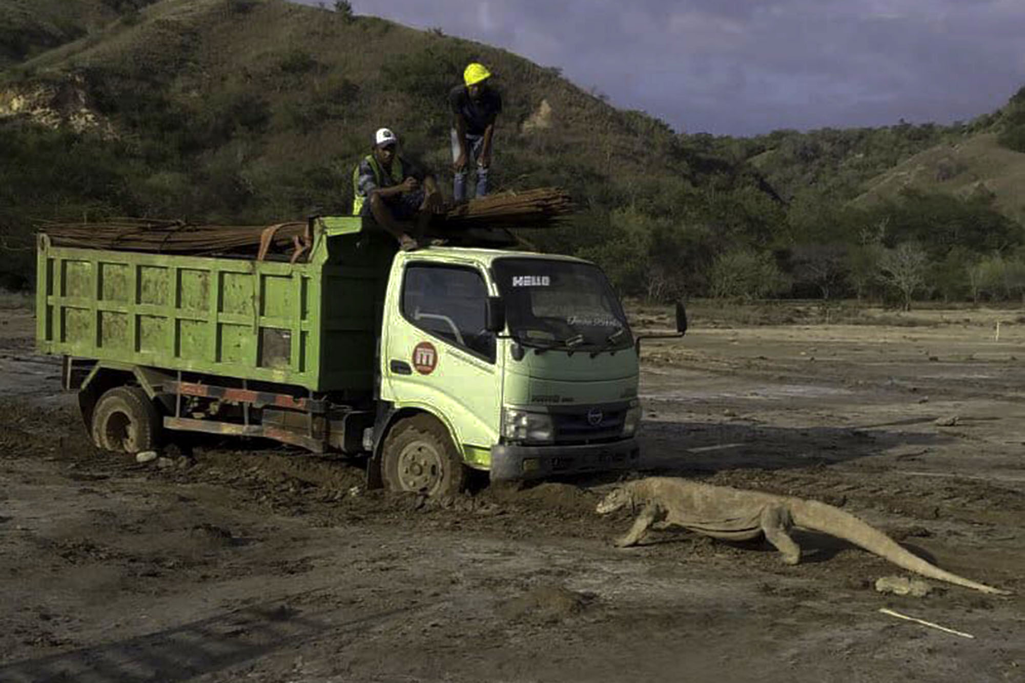 Komodo dragon photo sparks concerns about Indonesia's ...