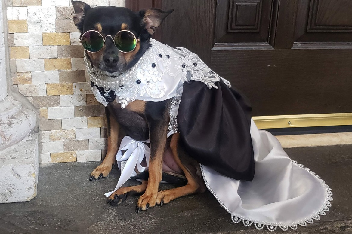 This rescue dog with a $10K wardrobe never wears the same outfit twice 1
