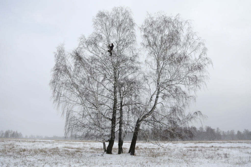 Student in Siberian village climbs birch tree for access to online classes 1