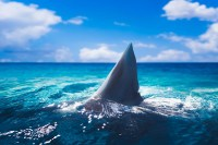 Florida man bitten by shark walks home before being hospitalized