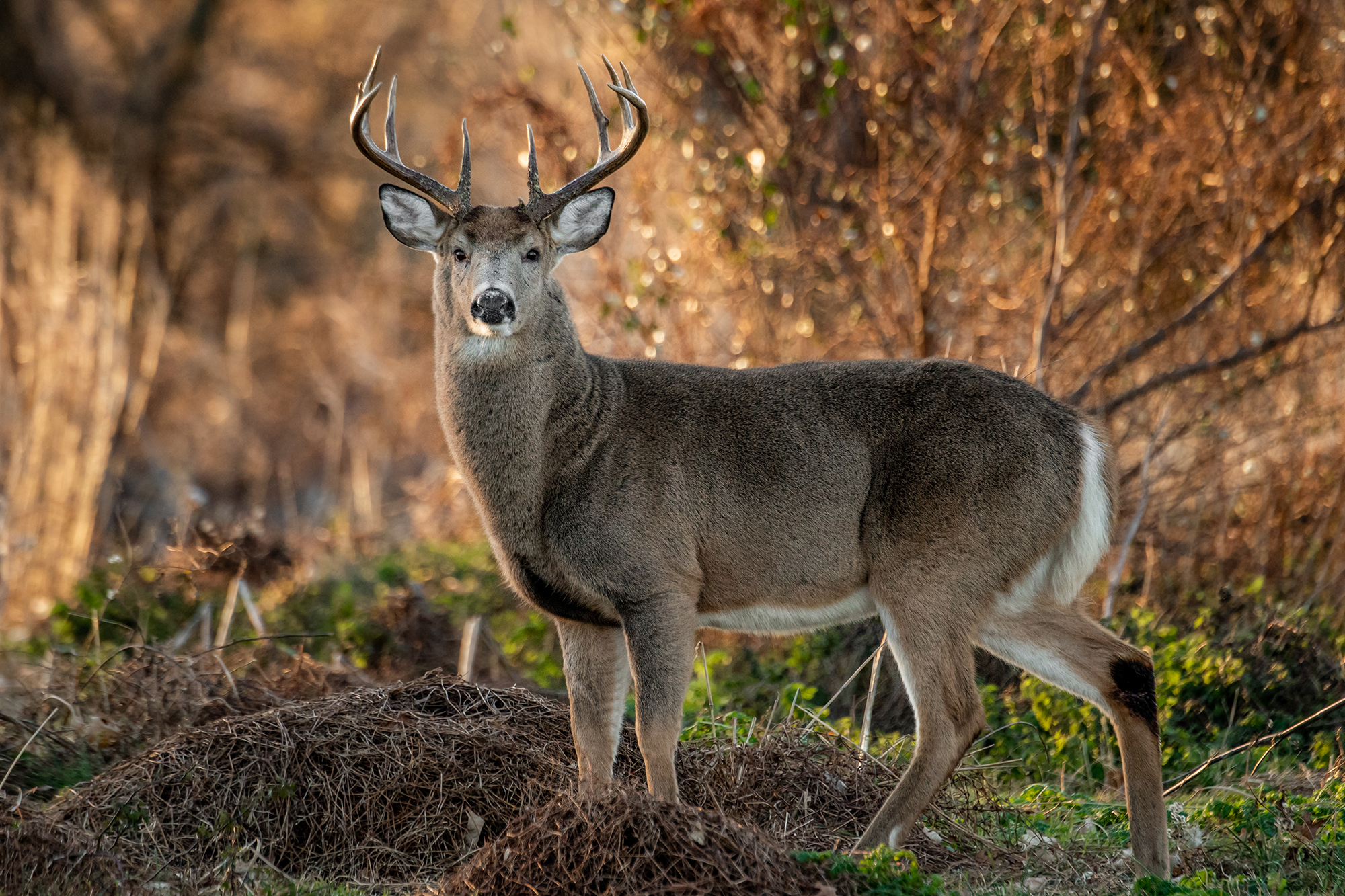 Ohio man fatally shoots son while deer hunting