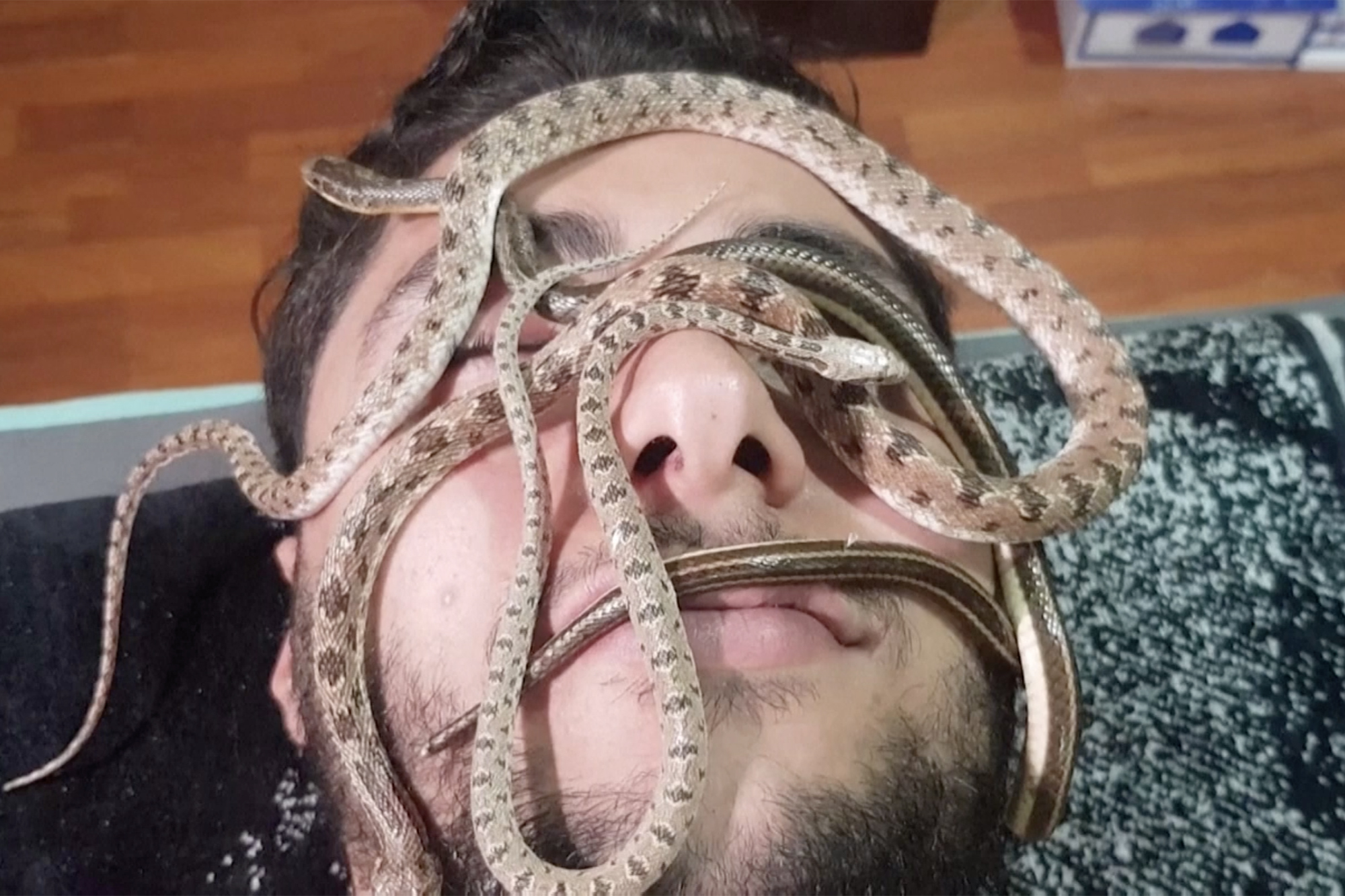 Snake massage trend is not for the faint-hearted