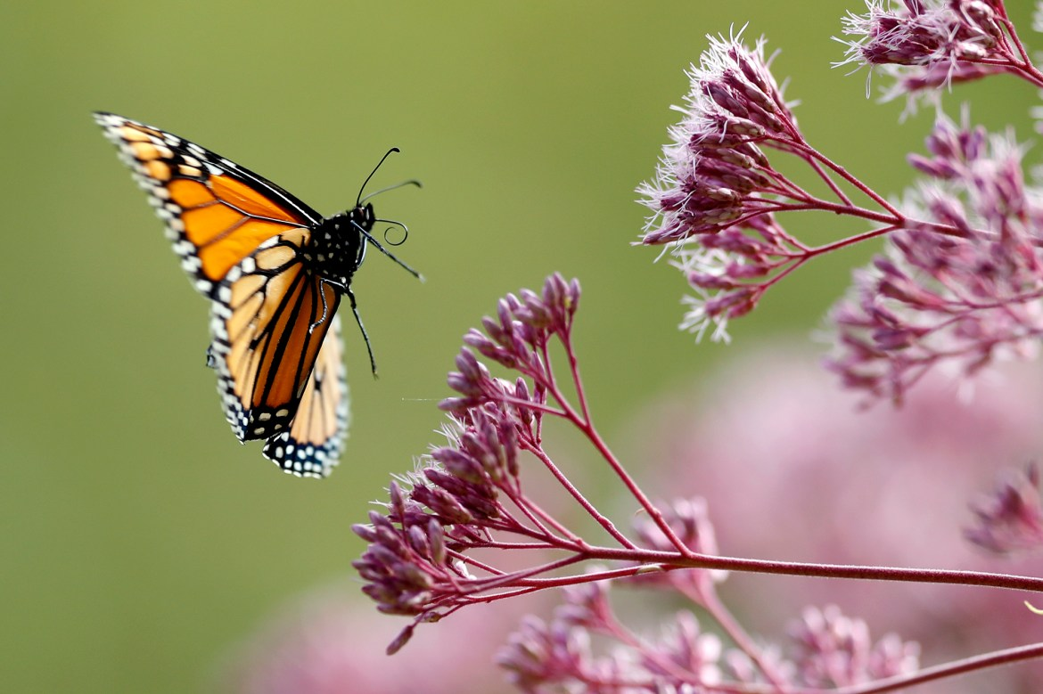 Scientists decry death by 1,000 cuts for world's insects 1