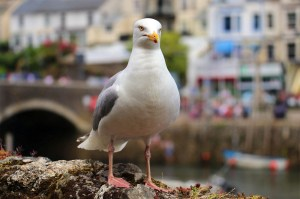 Scottish woman bit the man's tongue in the fight – then the seagull ate