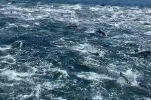 """1,000 dolphins """"massacre"""" near a tourist boat in a rare spectacle"""