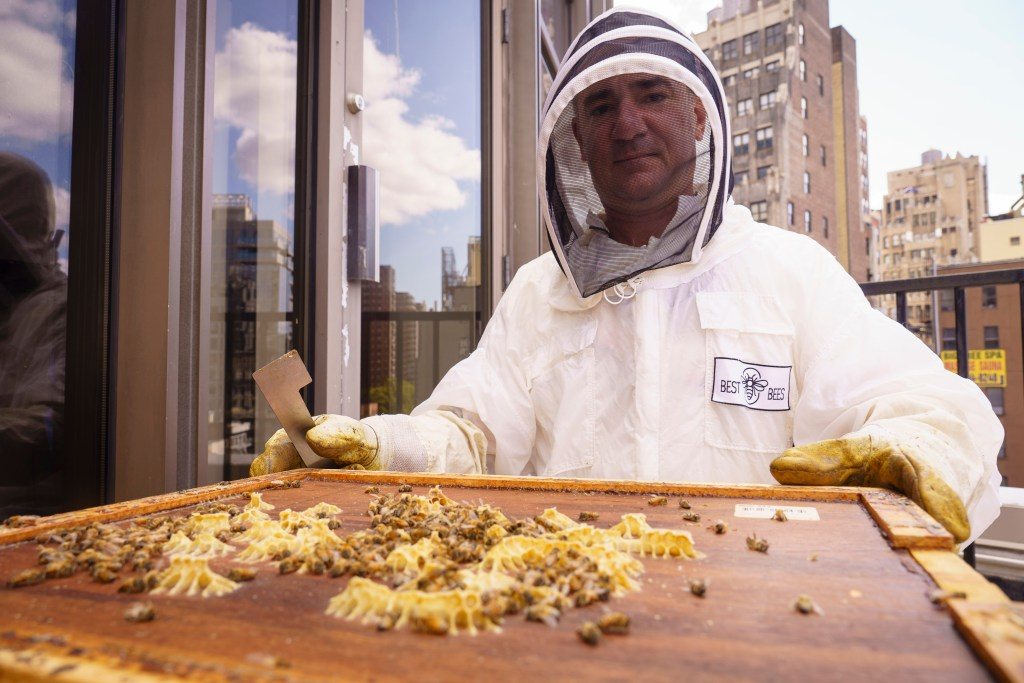 Beekeeper Tom Whitburn tends to the bees at MSG.