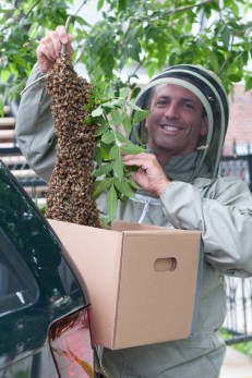 Andrew Coté, president of the NYC Beekeepers Association, said honeybees are not endangered.