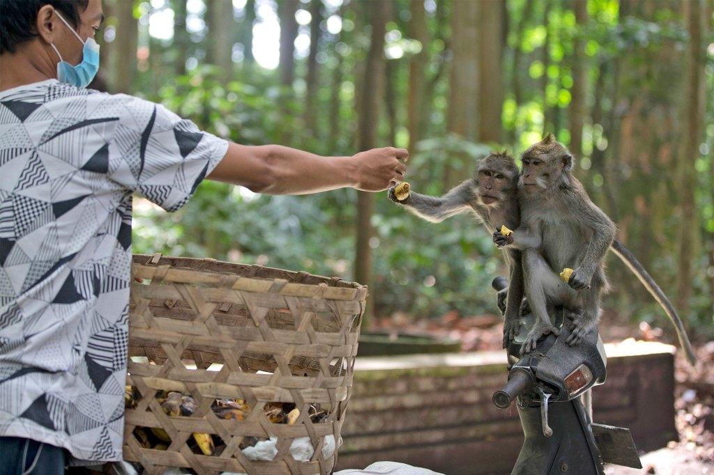 Macaque's