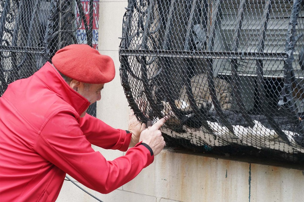 GOP mayoral nominee Curtis Sliwa plays with his cat through his apartment window fence in Manhattan.