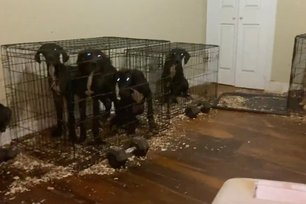 Dogs found in cages in Brooklyn