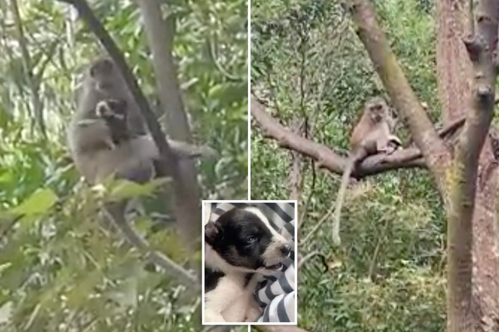 The puppy-loving public is rejoicing after the a cute canine was rescued from a wild monkey that had kidnapped and held it hostage for three days. A video of the ruff rescue is currently going viral online.