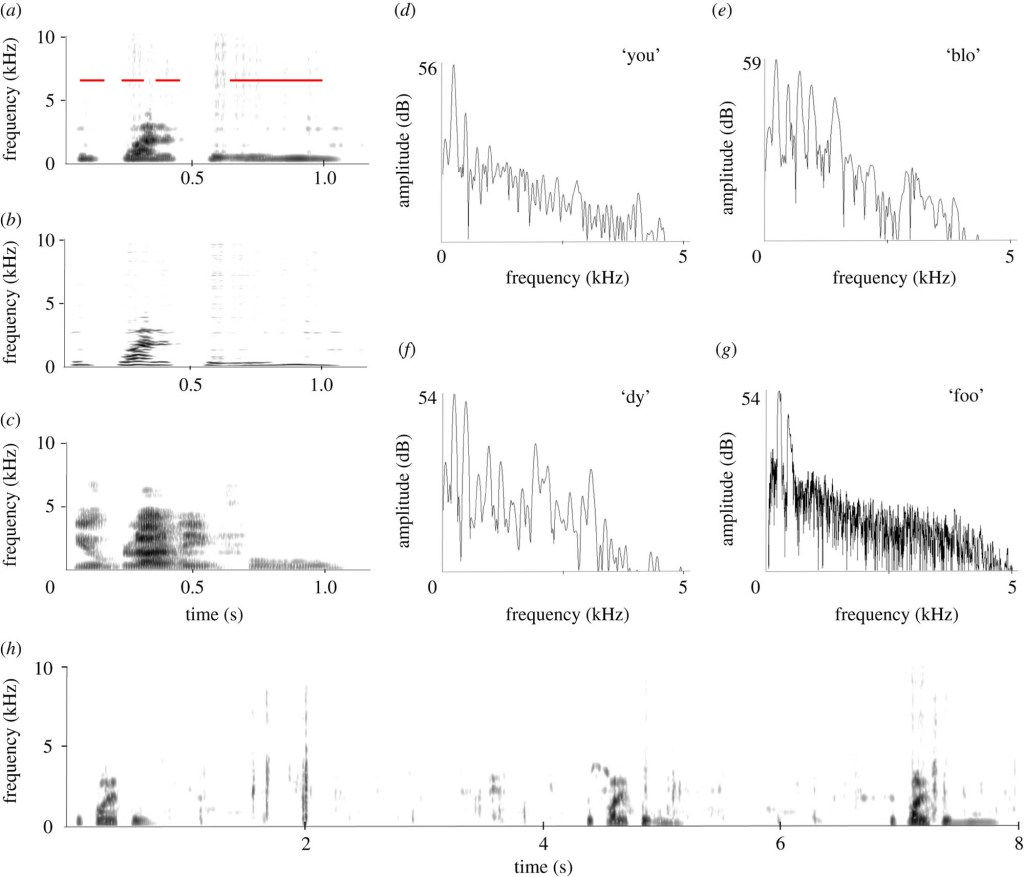 Broadband and (b) narrowband sonograms of the 'you bloody foo…' sound produced by Ripper.