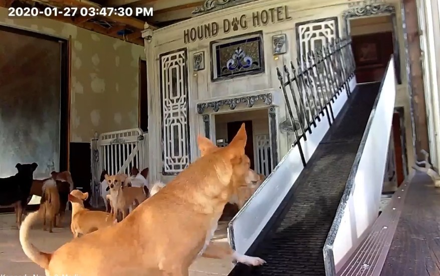 A seven-foot ramp allows the oldest dogs to climb up.