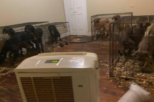 Kennisha Gilbert noticed her tenants' 21 dogs urine and feces seep into the bedroom where her two young sons sleep.