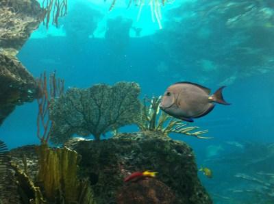 August 6: New York Aquarium, Coney Island, and Brighton ...