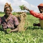 How to Get Loan for Farmers in Nigeria