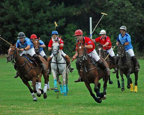 Polo-Berkuda-Cabang--Olahraga-Yang-Sempat-Mati-50-Tahun-1