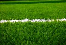 Ilustrasi rumput lapangan sepakbola
