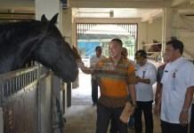 Sekolah berkuda Adira Pratama Mulya (APM) di Tigaraksa wilayah Pemkab Tangerang, Banten, jadi salah satu venue AG 2018 cabor Modern Pentathlon. (detakbanten.com)