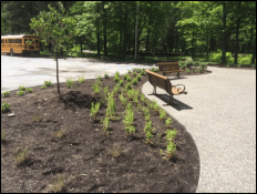 Creekside Classroom raingarden will attract native pollinators and serve as a teaching tool for State Parks staff, photo by Casey Holzworth, State Parks.